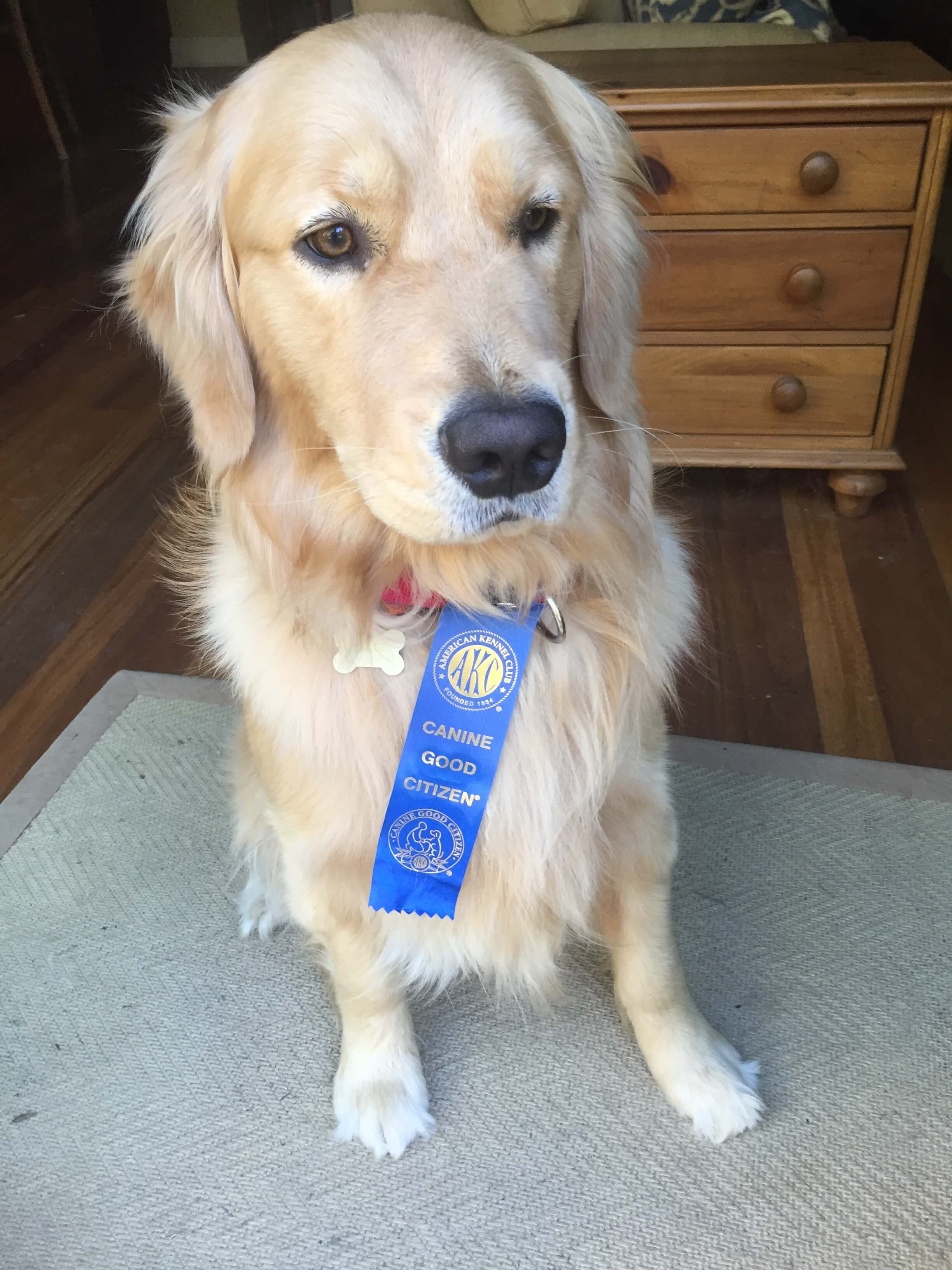 dog-wearing-ribbon-award