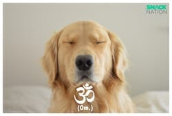 dog-om-poster-small
