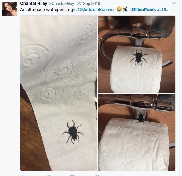 tp-spider