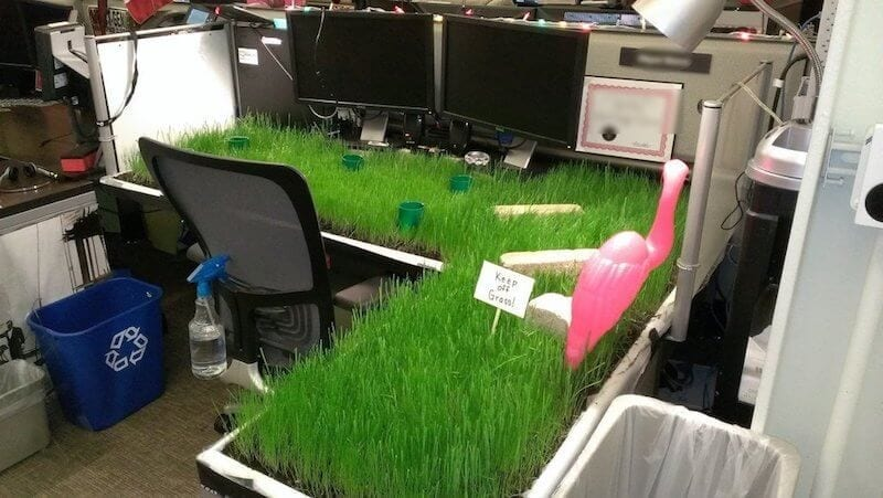 Office Pranks Covering Desk In Grass