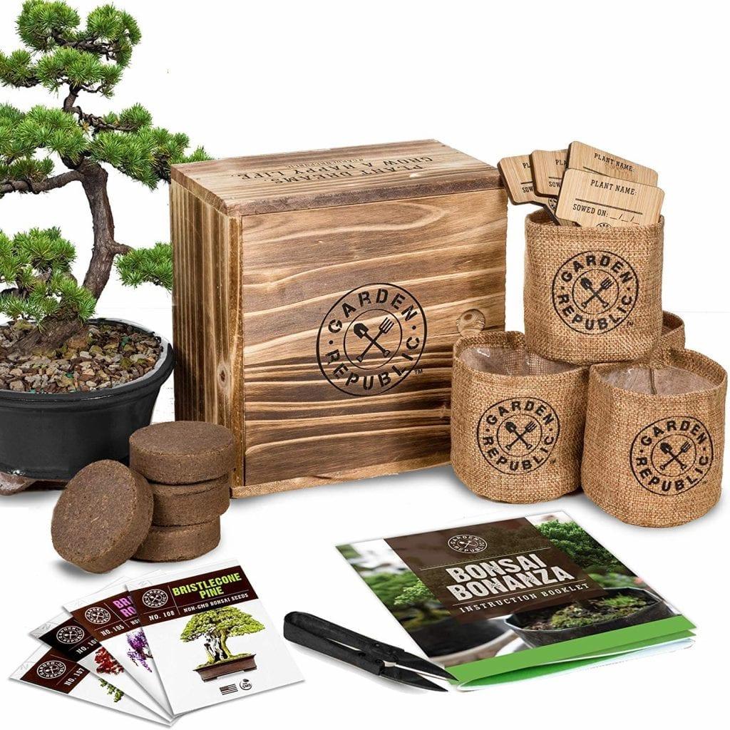 bonsai-tree-set