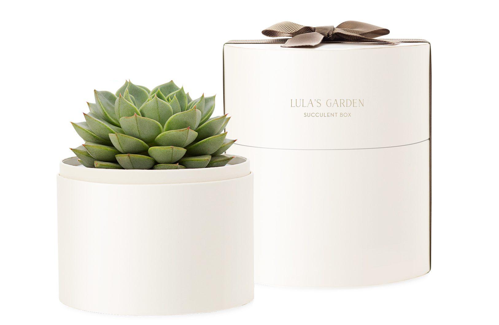 bliss_plant