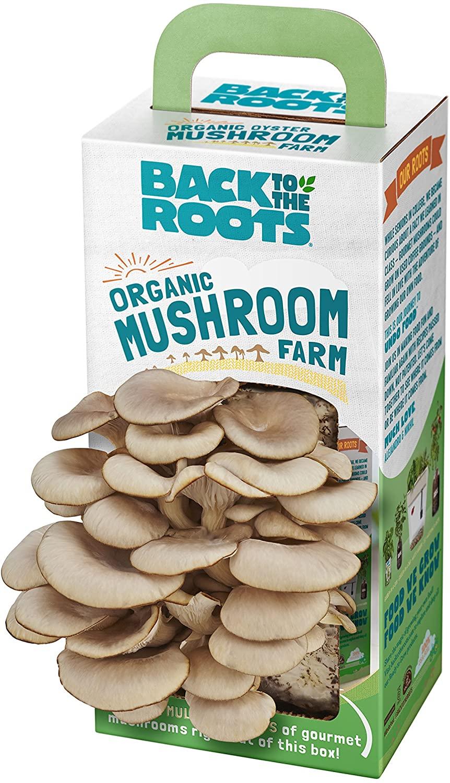 organic-mushroom-kit